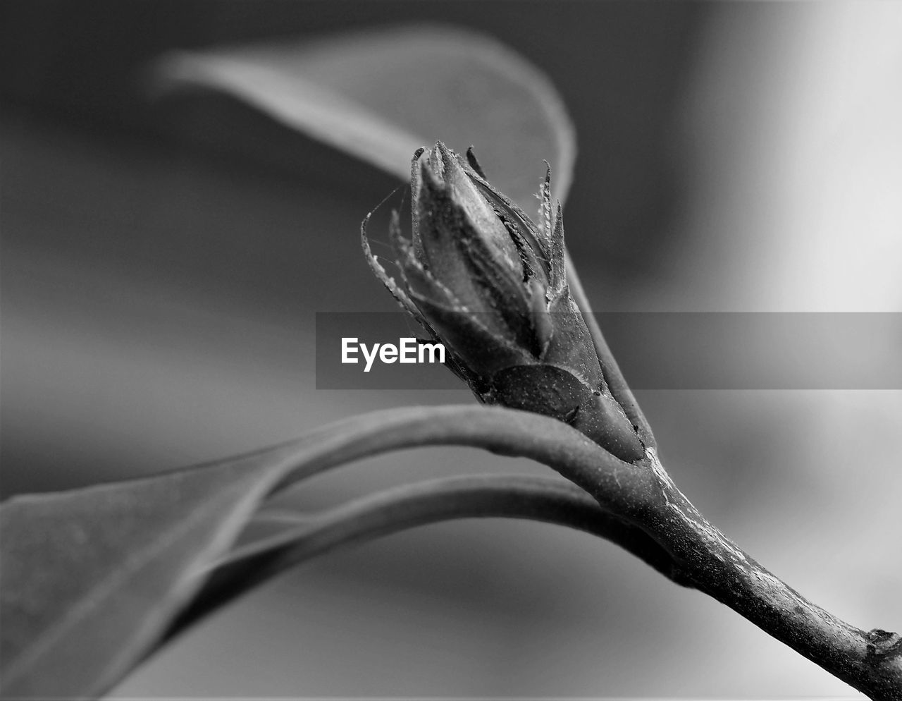 focus on foreground, close-up, plant, plant part, day, nature, no people, leaf, one animal, outdoors, animals in the wild, animal, animal wildlife, animal themes, selective focus, branch, beauty in nature, plant stem, growth, vertebrate, dried