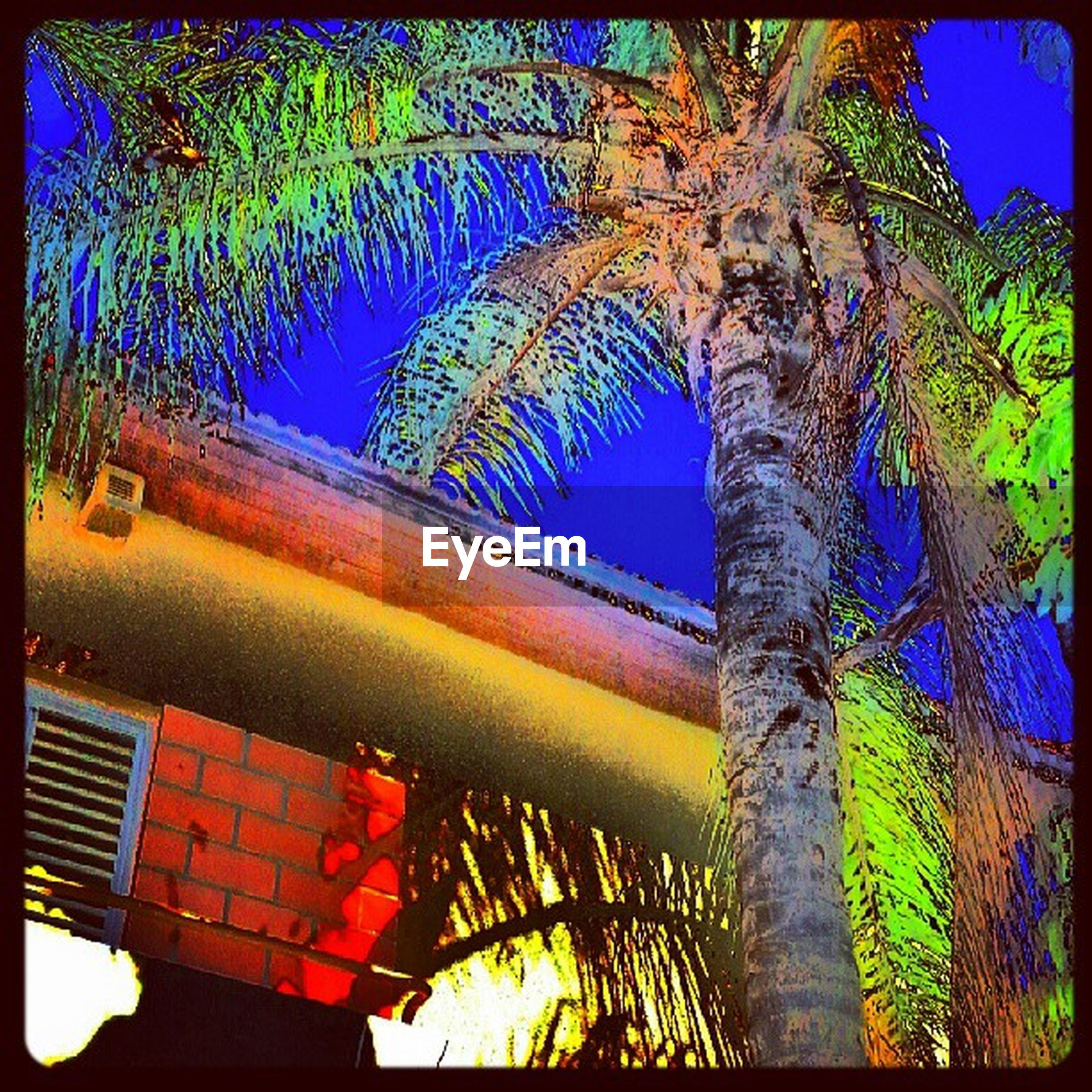 blue, low angle view, tree, built structure, architecture, transfer print, building exterior, auto post production filter, clear sky, branch, growth, palm tree, sunlight, day, no people, outdoors, tree trunk, multi colored, sky, house