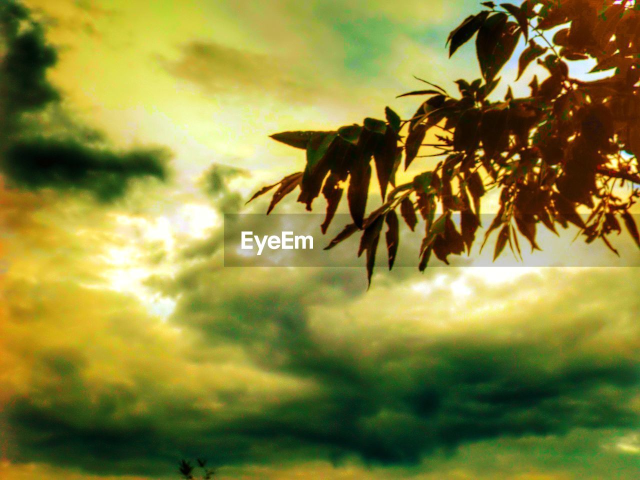 cloud - sky, sky, nature, growth, dramatic sky, low angle view, beauty in nature, sunset, no people, tranquility, outdoors, tree, scenics, silhouette, storm cloud, day, scenery