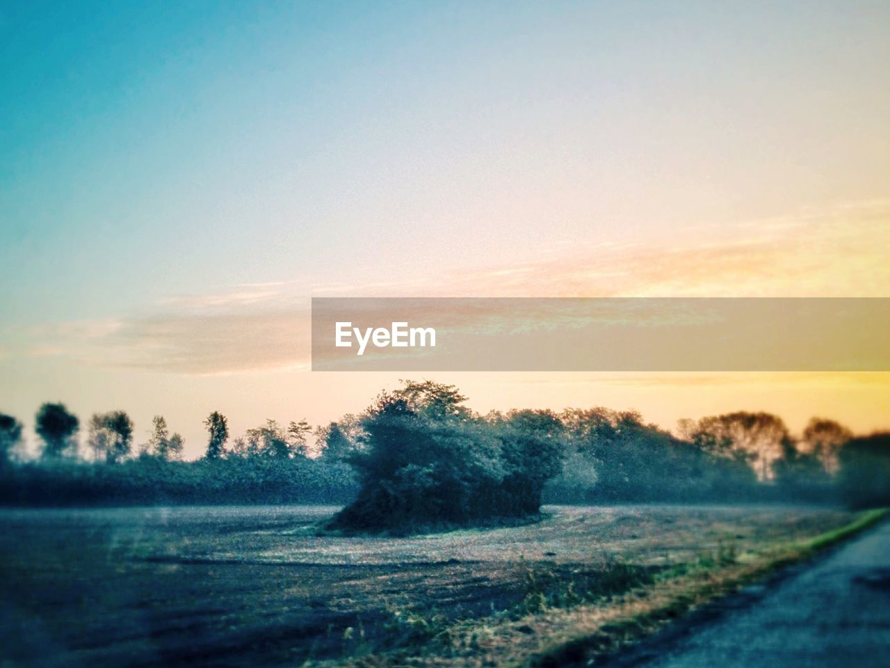 tranquil scene, landscape, tree, tranquility, nature, field, sunset, scenics, beauty in nature, no people, outdoors, sky, road, rural scene, clear sky, grass, day