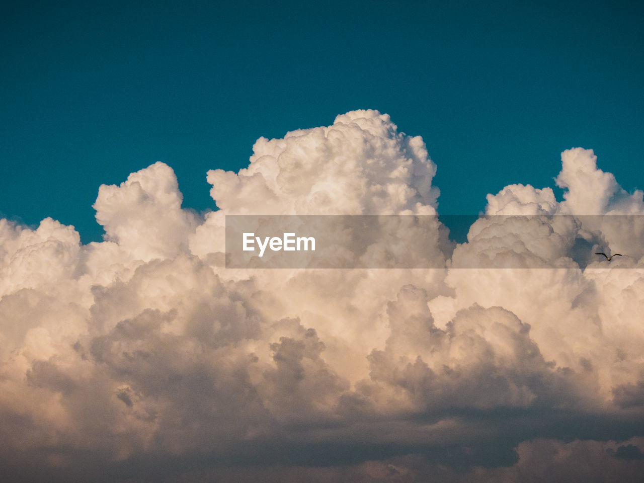 cloud - sky, sky, beauty in nature, scenics - nature, tranquility, no people, low angle view, nature, tranquil scene, day, idyllic, outdoors, blue, white color, fluffy, cloudscape, backgrounds, softness, meteorology