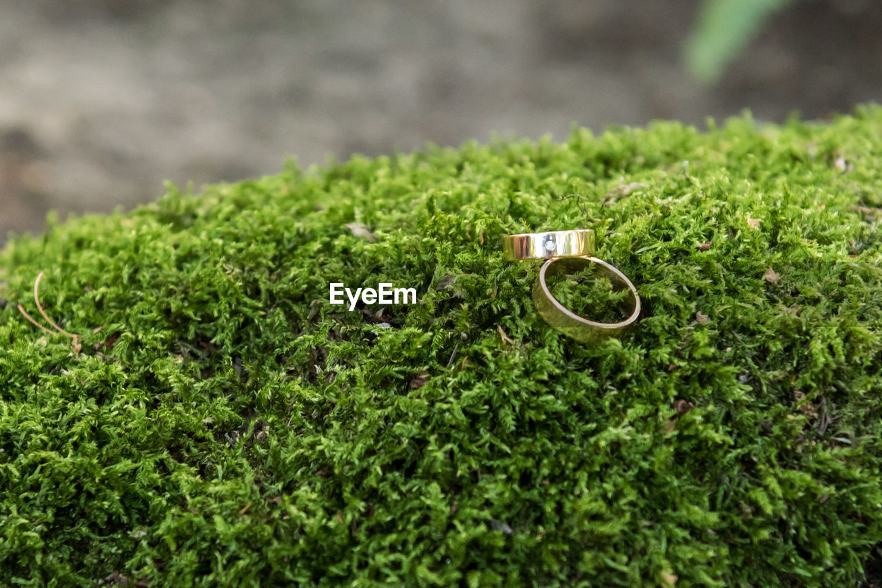 green color, plant, selective focus, growth, wedding ring, nature, jewelry, no people, day, ring, grass, focus on foreground, outdoors, field, land, wedding, beauty in nature, tranquility, life events, close-up, personal accessory