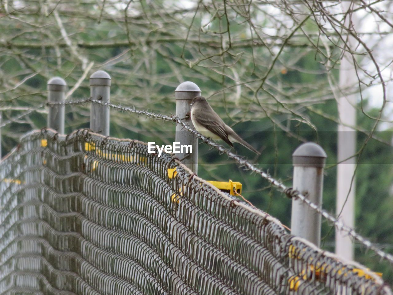 focus on foreground, vertebrate, fence, boundary, safety, barrier, metal, bird, protection, security, animal themes, animal, no people, day, tree, animals in the wild, perching, outdoors, nature, animal wildlife