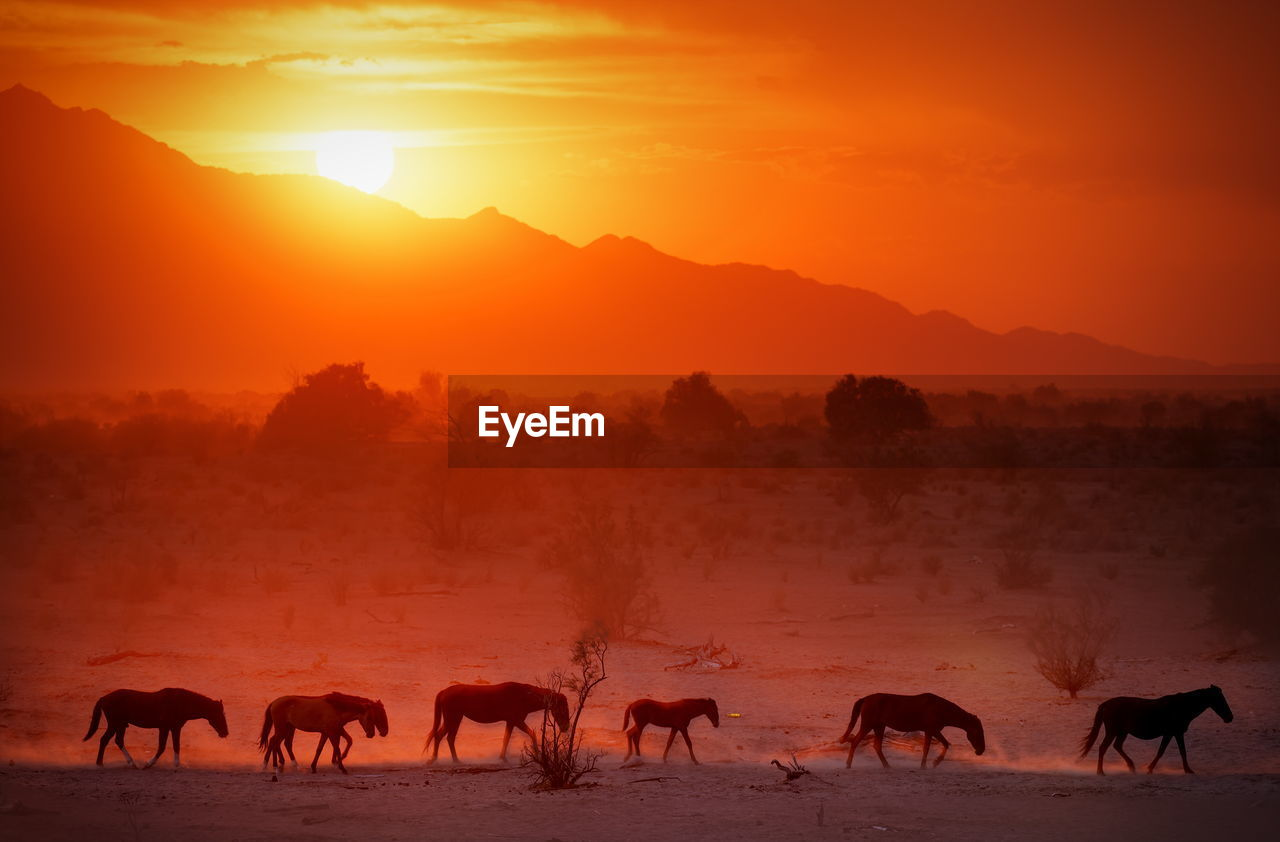 Horses on field against sky during sunset