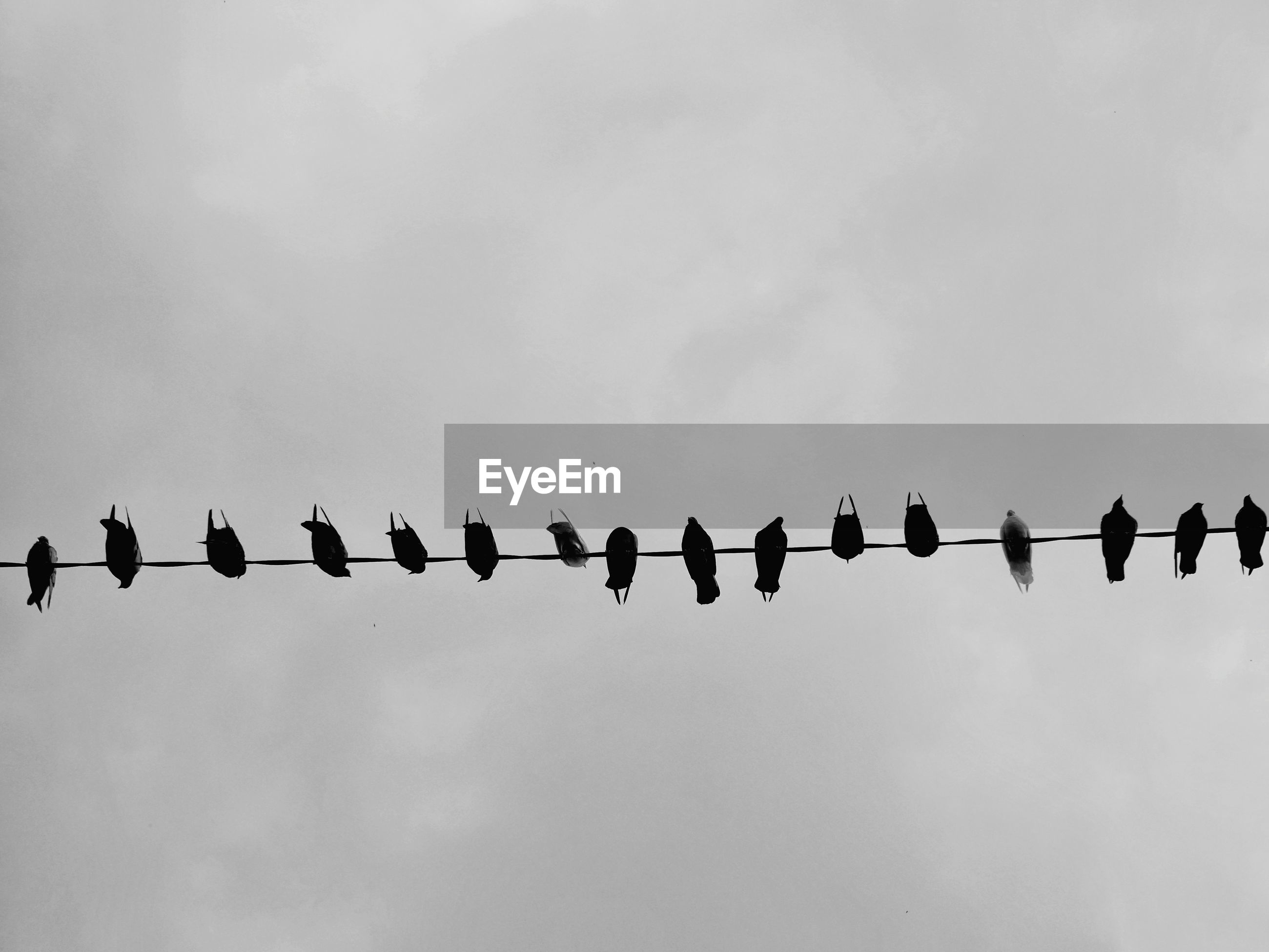 LOW ANGLE VIEW OF BIRDS ON CABLE