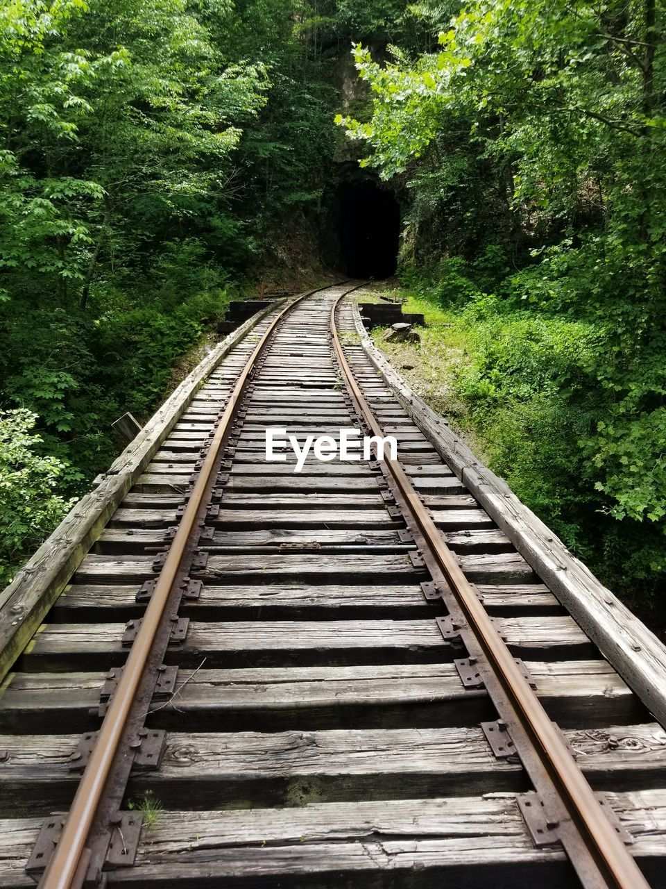 rail transportation, track, railroad track, tree, transportation, direction, plant, the way forward, forest, no people, connection, day, land, nature, metal, diminishing perspective, green color, outdoors, growth, vanishing point, parallel