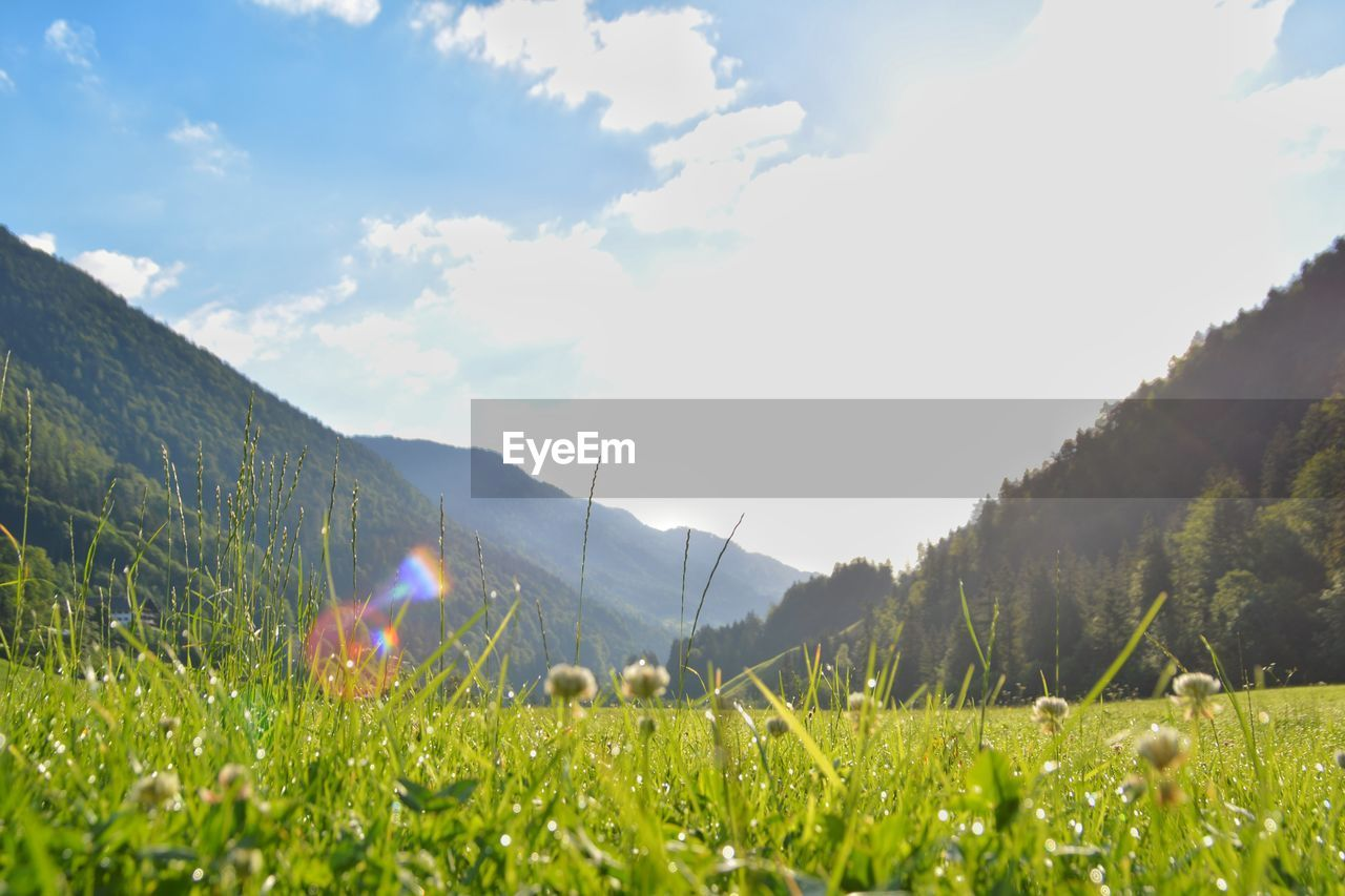 plant, sky, beauty in nature, grass, nature, green color, field, cloud - sky, growth, land, day, sunlight, tranquility, mountain, landscape, scenics - nature, tranquil scene, environment, tree, no people, outdoors, lens flare, bright, surface level