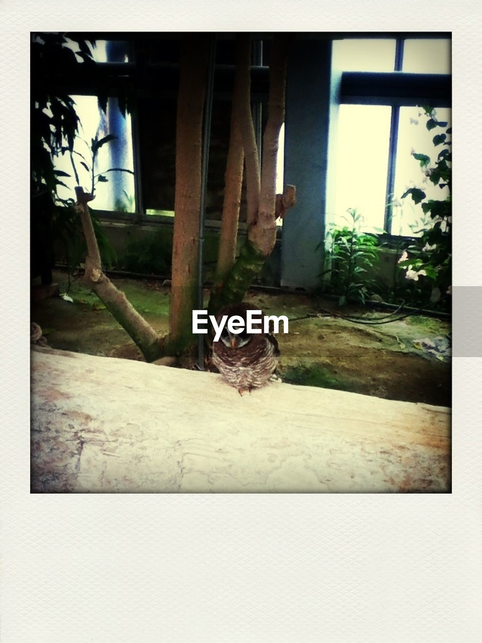 transfer print, one animal, animal themes, auto post production filter, pets, built structure, domestic animals, domestic cat, architecture, mammal, window, cat, house, building exterior, abandoned, plant, indoors, front or back yard, day, wall - building feature
