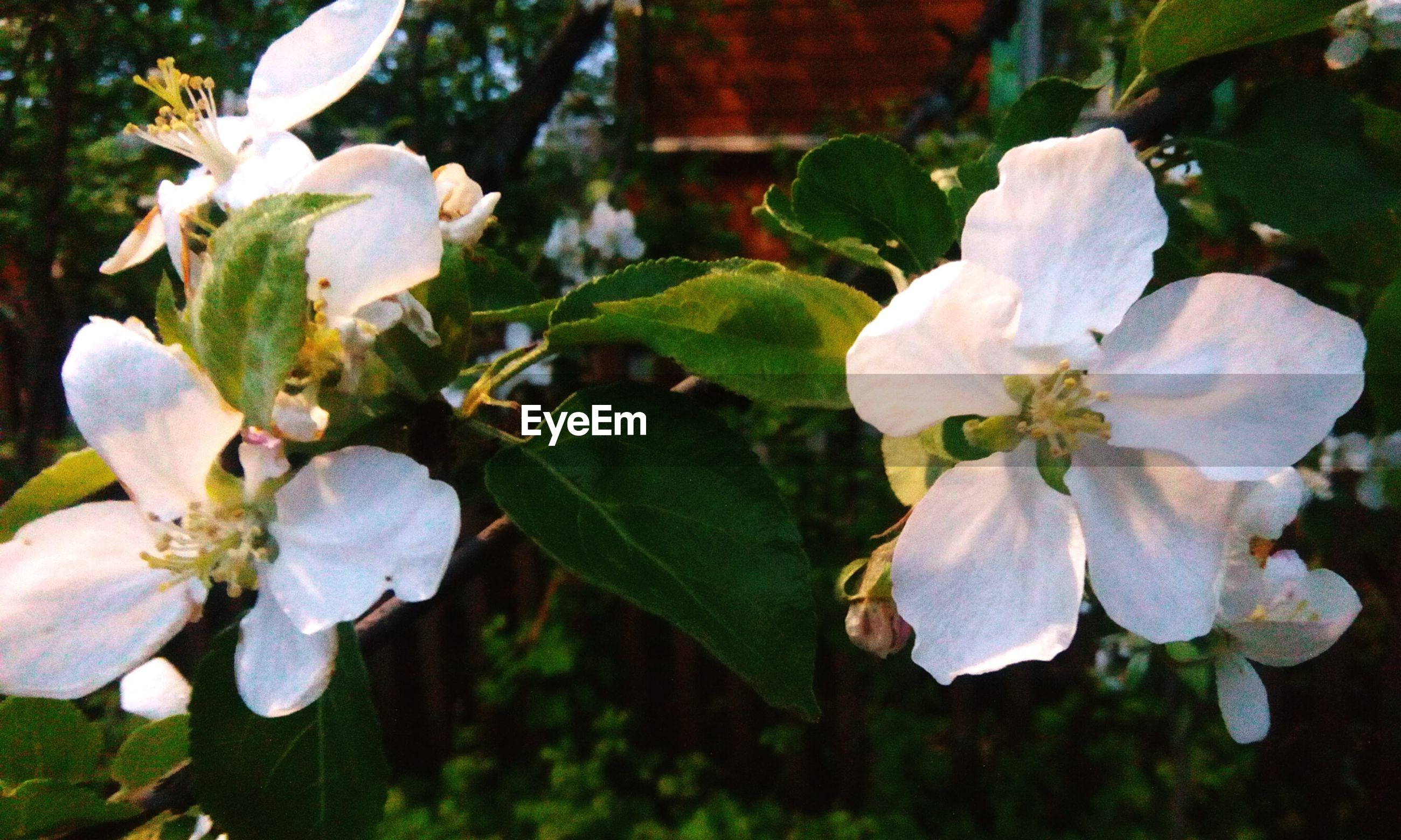 flowering plant, flower, plant, beauty in nature, fragility, vulnerability, growth, freshness, petal, inflorescence, flower head, close-up, white color, plant part, blossom, leaf, nature, no people, focus on foreground, pollen, outdoors, springtime, spring