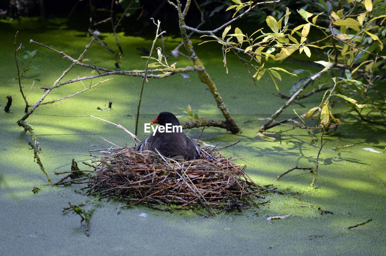 BIRD PERCHING ON NEST BY LAKE