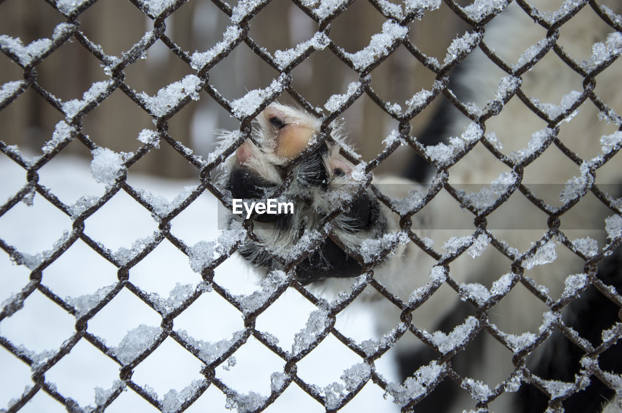 Low section of dog seen through chainlink fence during winter