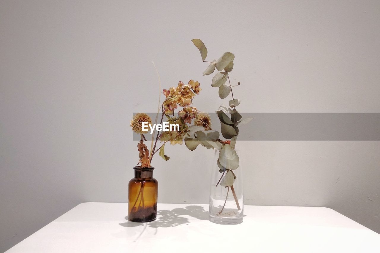 vase, indoors, plant, table, flower, nature, no people, flowering plant, decoration, vulnerability, wall - building feature, fragility, container, still life, studio shot, glass - material, copy space, bottle, beauty in nature, freshness, flower head