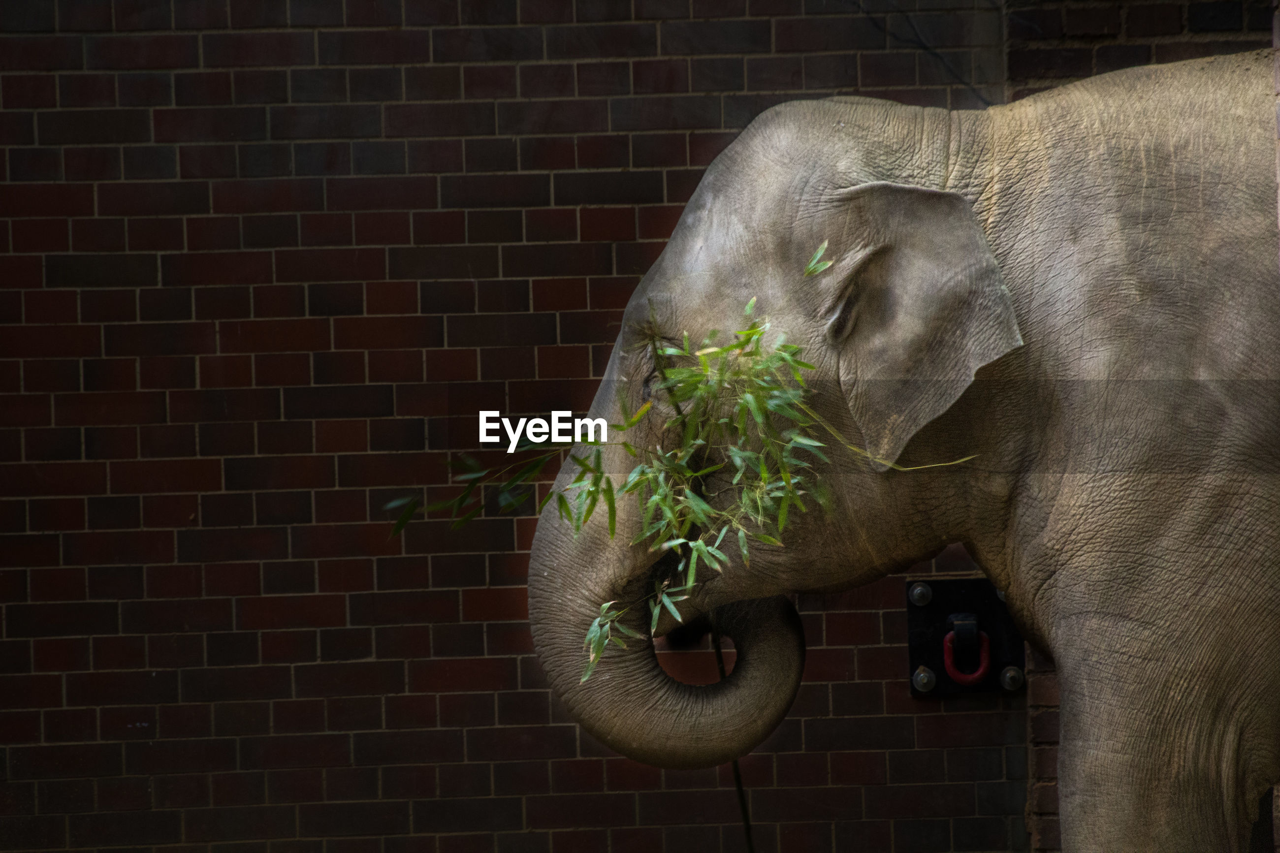 SIDE VIEW OF ELEPHANT IN WALL