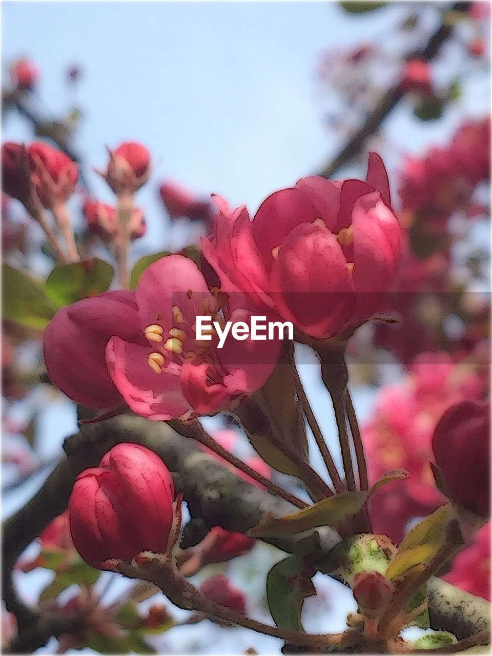 flower, beauty in nature, growth, petal, fragility, nature, freshness, blossom, tree, day, no people, close-up, springtime, flower head, outdoors, pink color, plant, blooming, sky