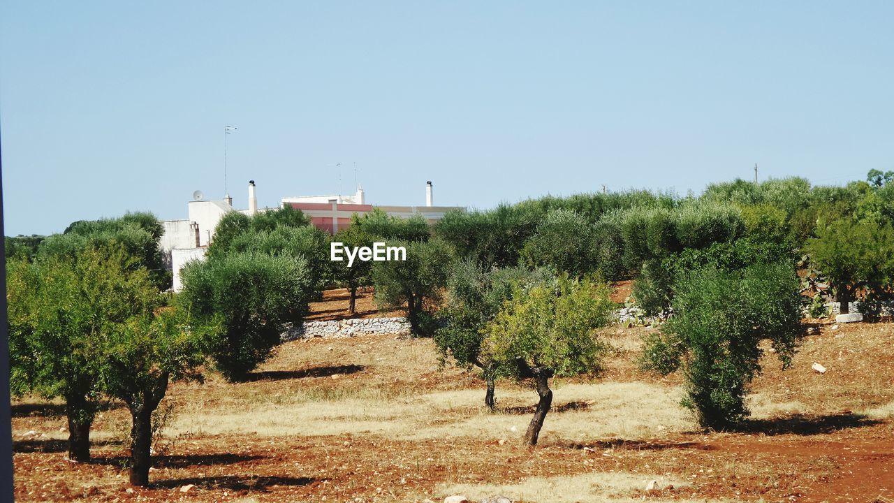 TREES GROWING IN FARM AGAINST SKY