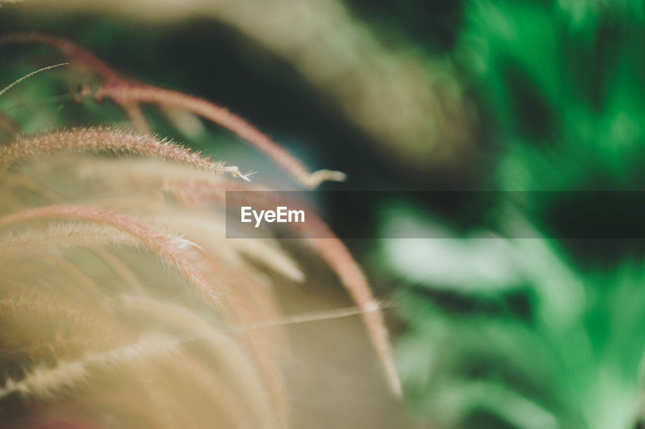 selective focus, close-up, plant, beauty in nature, growth, no people, freshness, nature, fragility, day, vulnerability, outdoors, flower, green color, extreme close-up, leaf, plant part, botany, macro, flowering plant, softness, dandelion seed
