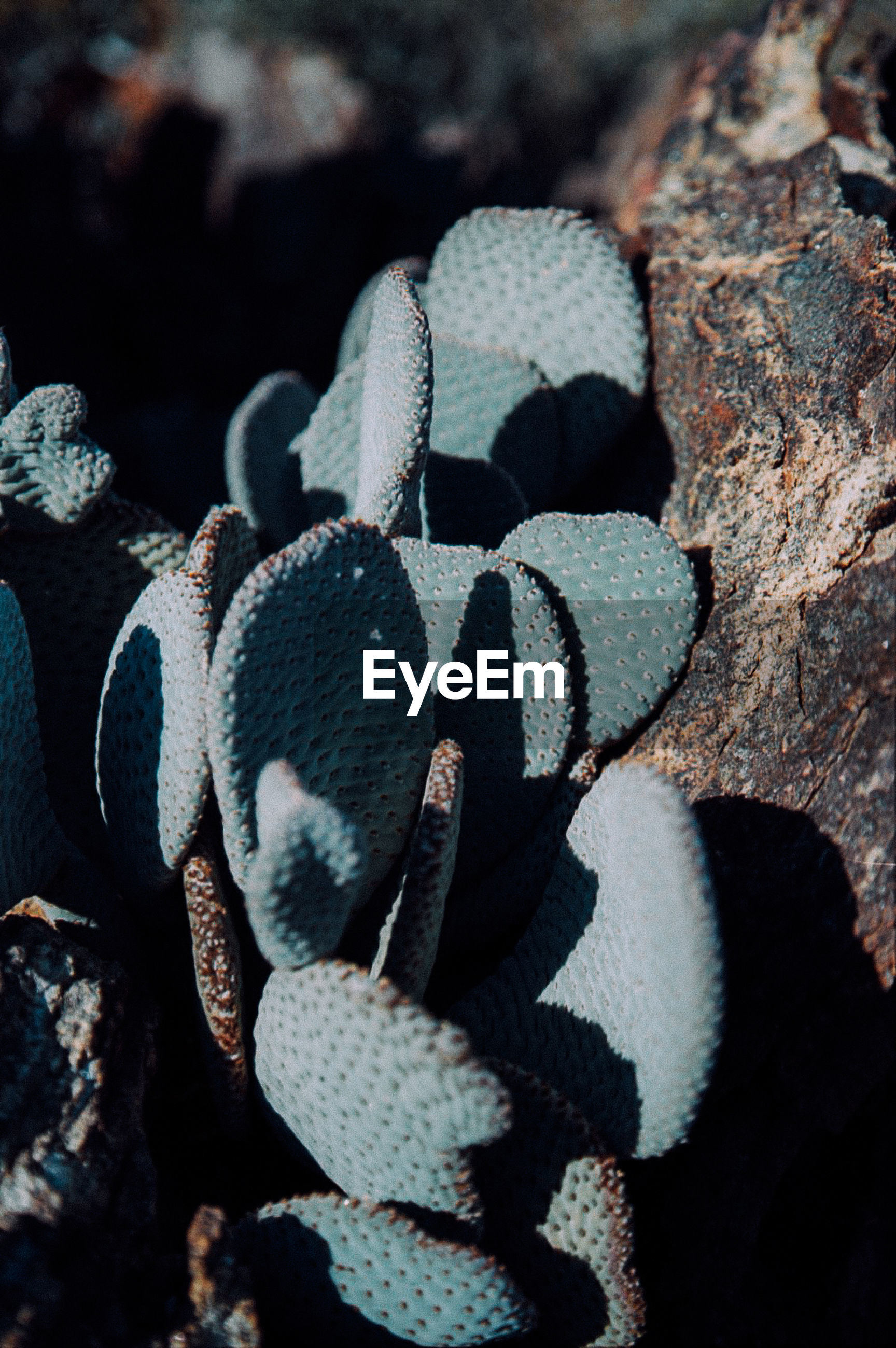High angle view of cactus growing by rock