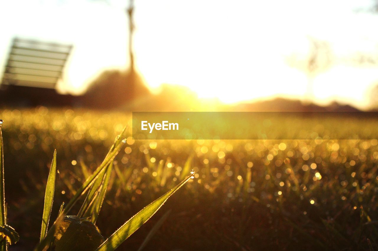nature, field, growth, grass, beauty in nature, no people, outdoors, plant, tranquility, sunlight, landscape, close-up, day, sunset, freshness, sky