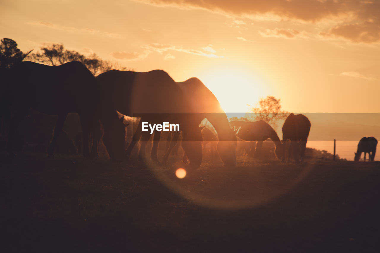 Silhouette Horses Grazing On Field Against Sky During Sunset