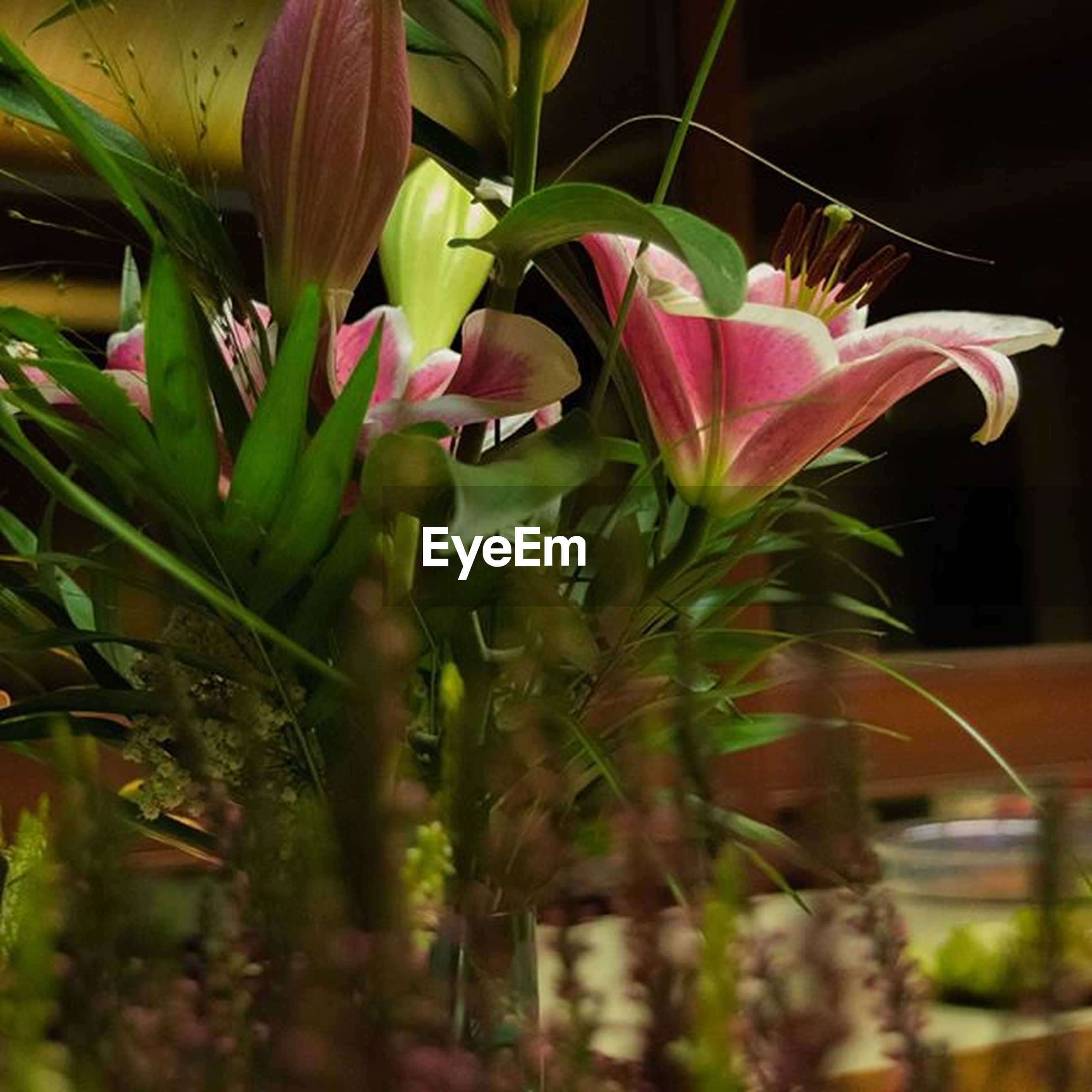 flower, growth, plant, freshness, fragility, petal, close-up, leaf, focus on foreground, potted plant, nature, beauty in nature, selective focus, stem, blooming, flower head, pink color, no people, in bloom, day