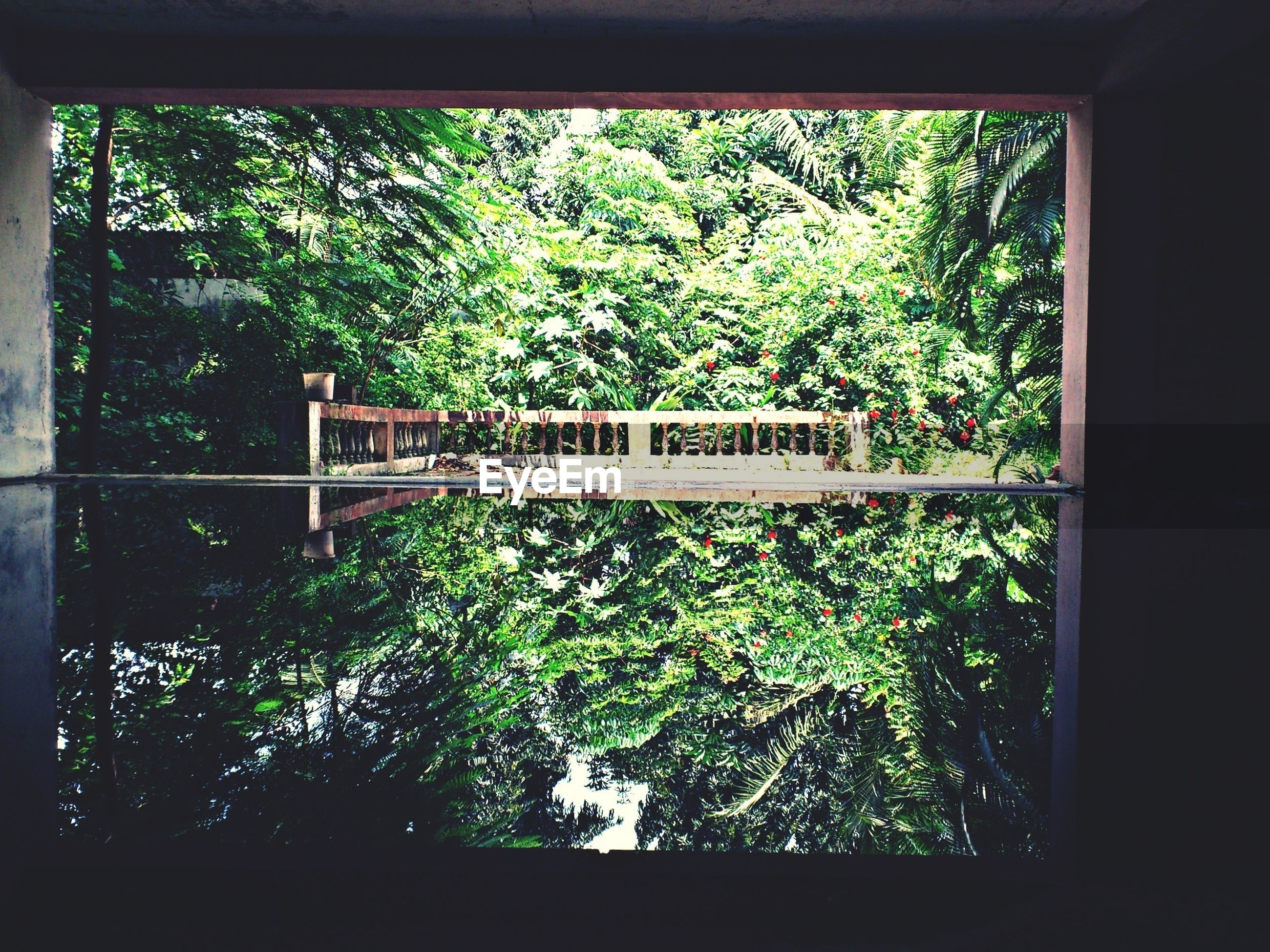 tree, growth, green color, railing, indoors, plant, window, branch, day, nature, text, built structure, no people, lush foliage, fence, tranquility, forest, sunlight, metal, architecture