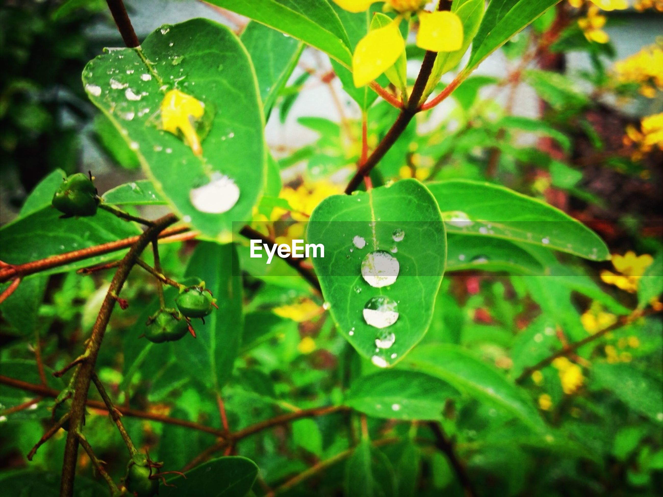 leaf, green color, growth, drop, close-up, water, wet, plant, nature, focus on foreground, freshness, beauty in nature, dew, green, selective focus, day, outdoors, fragility, leaves, no people