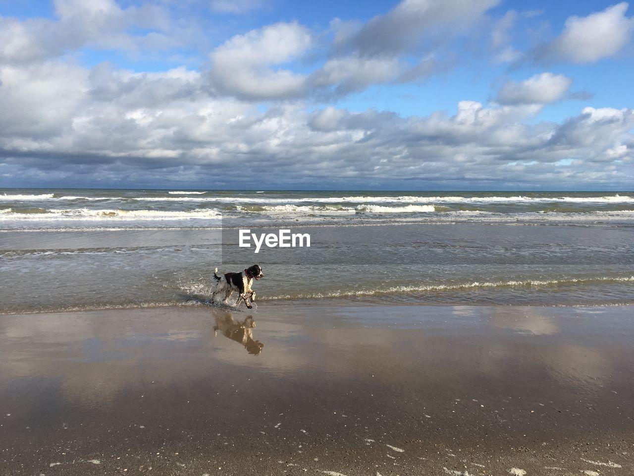 water, one animal, sea, cloud - sky, animal, animal themes, mammal, canine, sky, pets, dog, domestic animals, beach, domestic, land, horizon over water, vertebrate, beauty in nature, horizon, no people, outdoors