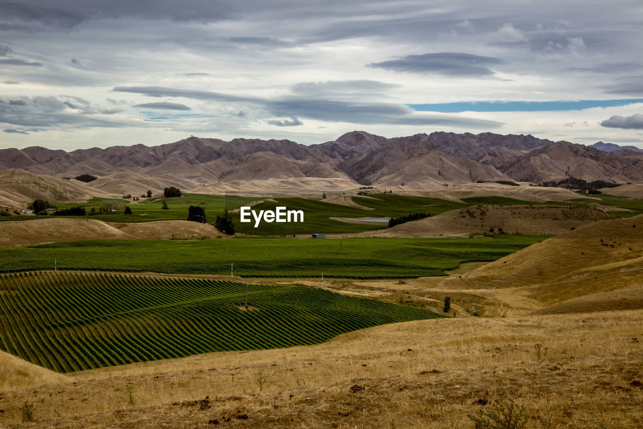 High angle view of vineyard against mountain range