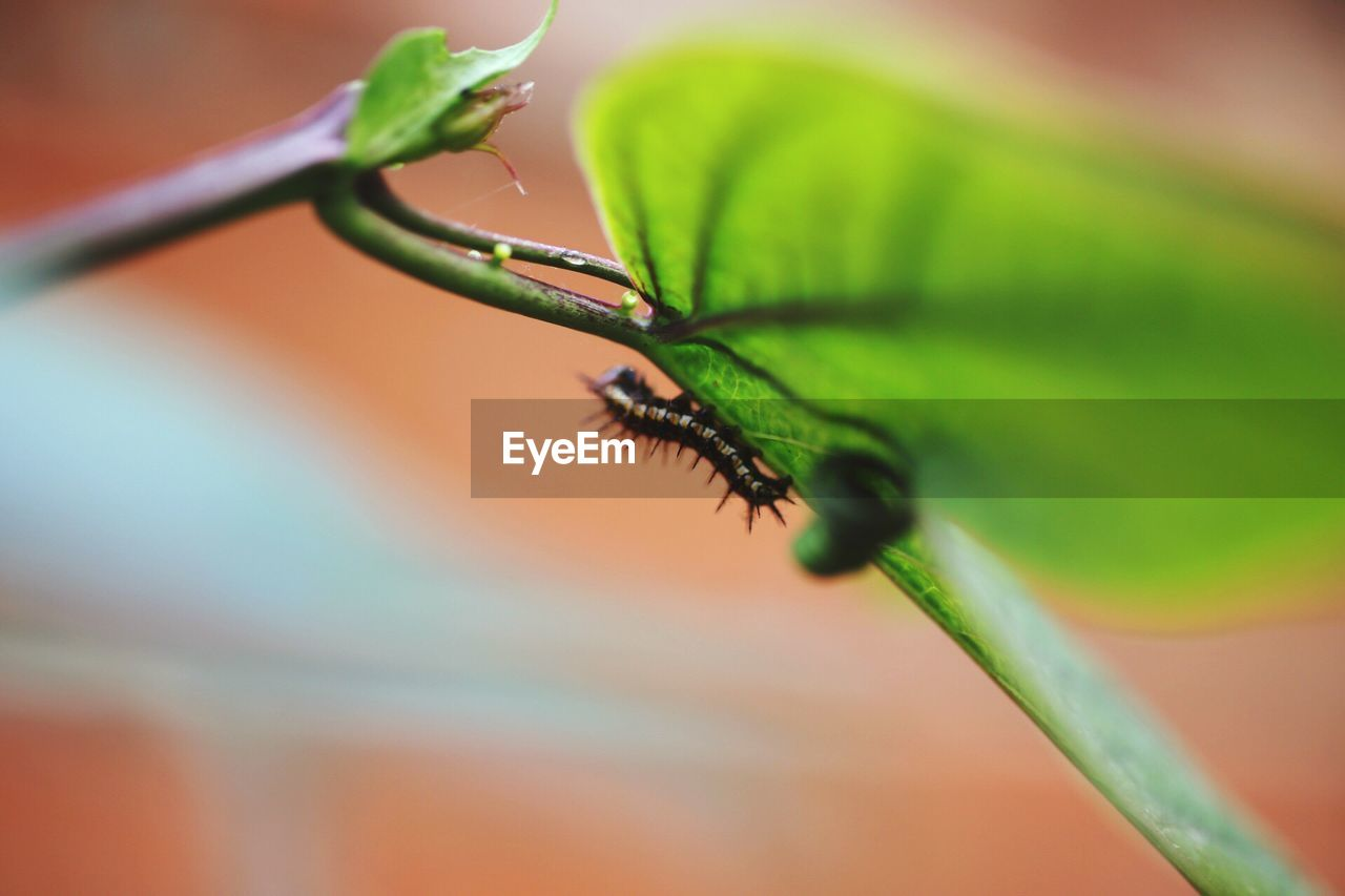 insect, one animal, animals in the wild, animal themes, green color, leaf, close-up, selective focus, plant, animal wildlife, no people, outdoors, growth, nature, day, beauty in nature, freshness