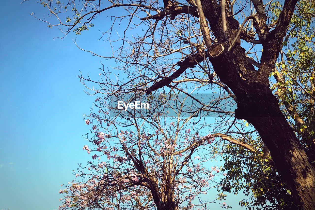 tree, branch, low angle view, nature, beauty in nature, growth, day, tree trunk, no people, flower, outdoors, clear sky, springtime, sky, freshness, scenics, fragility
