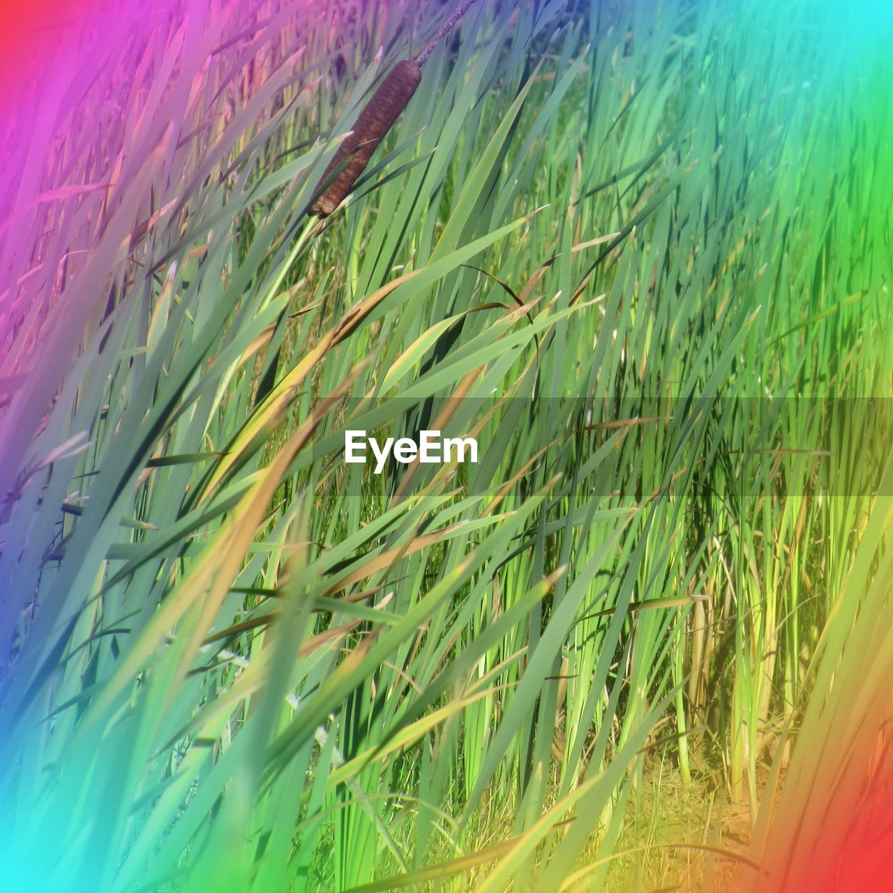 growth, green color, plant, nature, grass, no people, outdoors, day, beauty in nature, close-up, freshness, sky