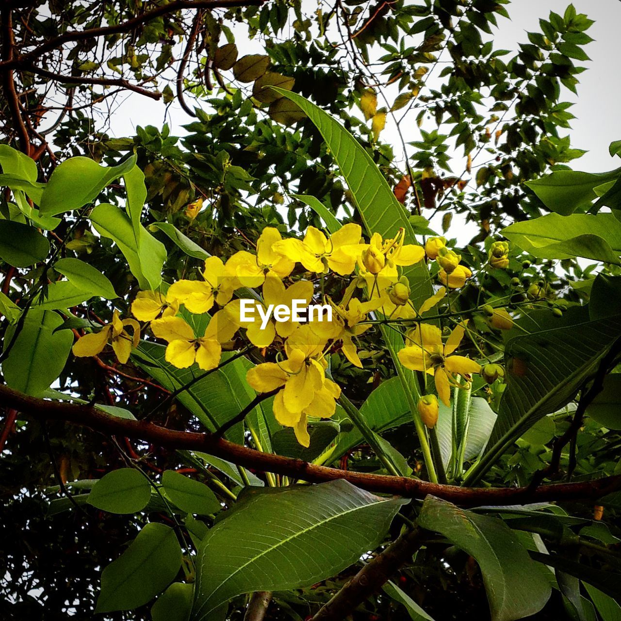 leaf, yellow, growth, flower, nature, beauty in nature, freshness, green color, day, tree, plant, outdoors, fragility, no people, low angle view, branch, blooming, close-up, flower head