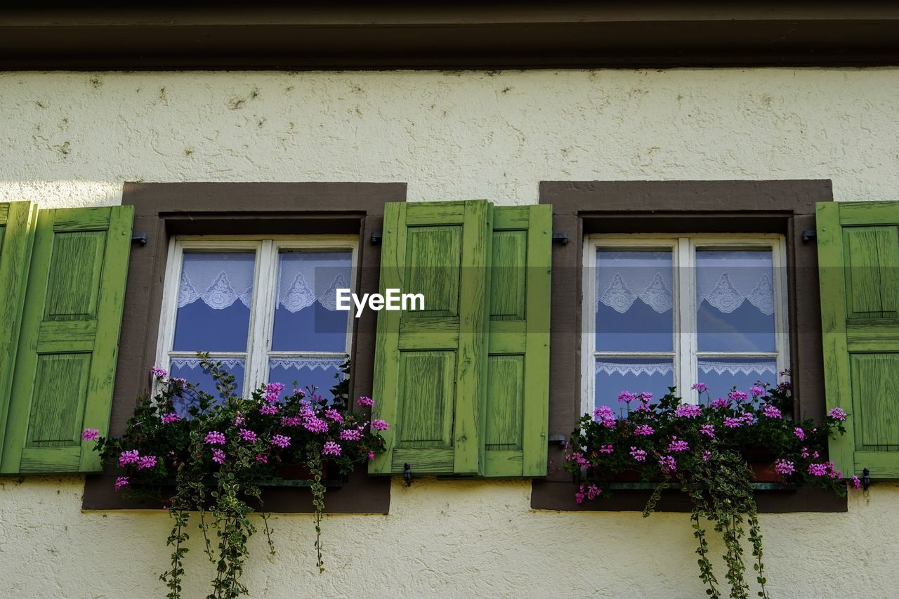 window, flower, flowering plant, architecture, built structure, plant, no people, building exterior, glass - material, building, day, wall - building feature, low angle view, potted plant, pink color, nature, outdoors, growth, house, window sill, purple, window frame, flower pot