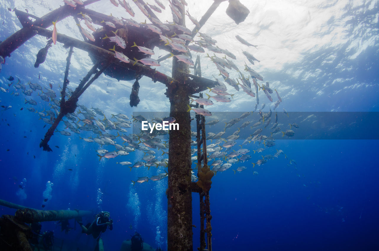 underwater, sea, water, swimming, undersea, nature, sport, exploration, animals in the wild, blue, sea life, day, animal, animal wildlife, low angle view, real people, adventure, vertebrate, one person, outdoors, marine, school of fish, underwater diving