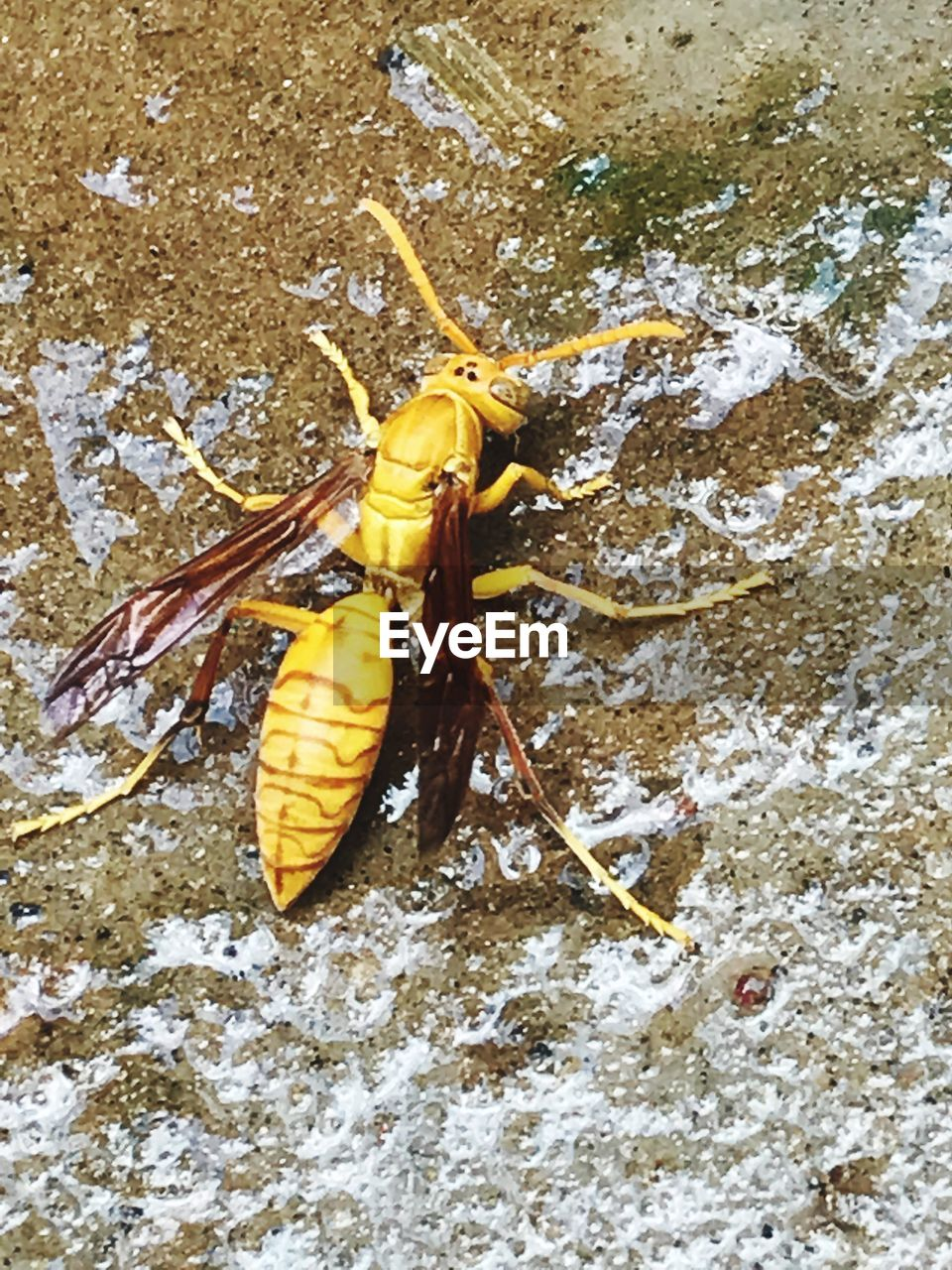 animal themes, animals in the wild, day, yellow, no people, one animal, insect, close-up, outdoors, nature, water