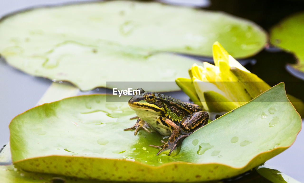 animal wildlife, animal, close-up, animals in the wild, no people, animal themes, green color, insect, freshness, one animal, invertebrate, nature, leaf, selective focus, plant part, plant, flower, fruit, food, focus on foreground