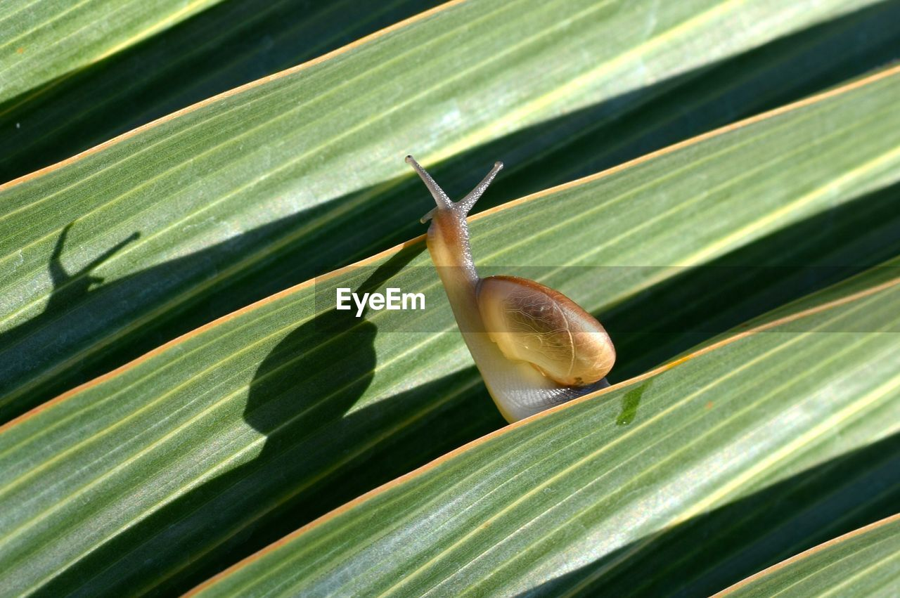 plant part, leaf, green color, close-up, nature, no people, plant, day, one animal, growth, animal wildlife, animals in the wild, invertebrate, animal themes, sunlight, animal, mollusk, outdoors, gastropod, focus on foreground, leaves, palm leaf
