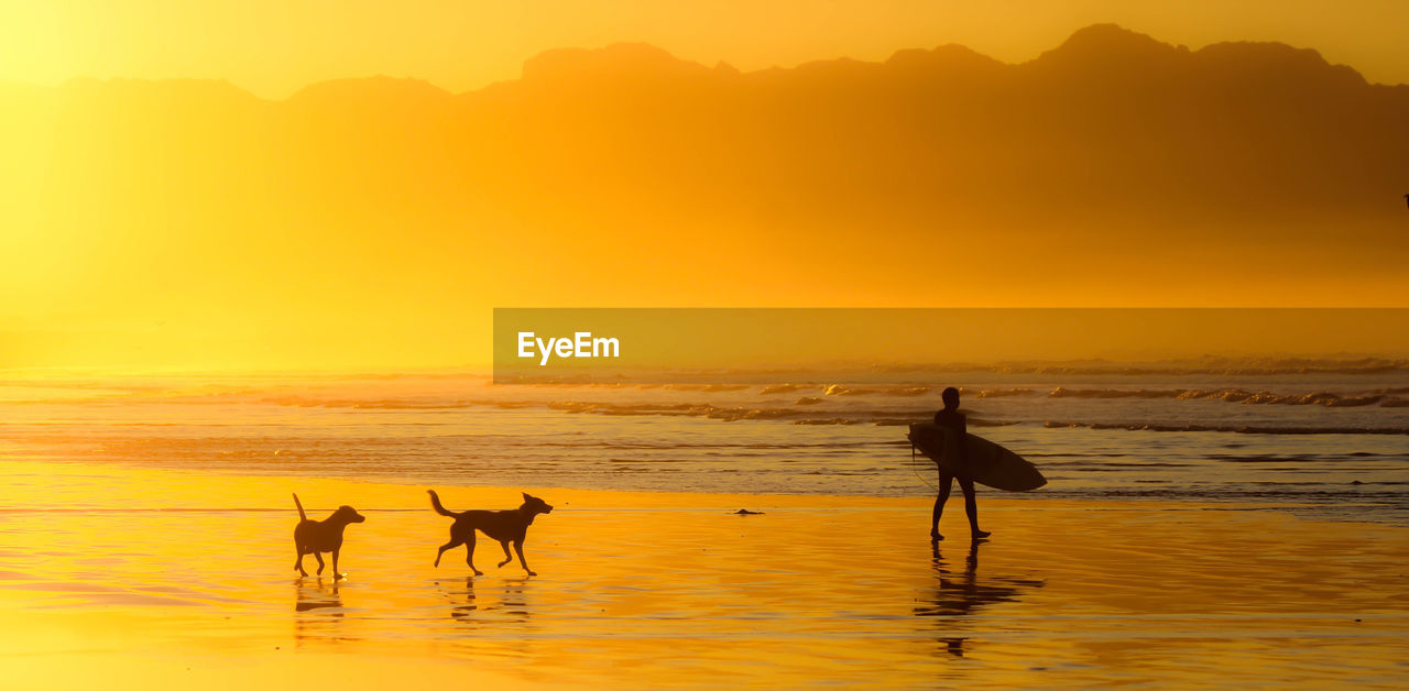 sunset, sky, water, sea, silhouette, beauty in nature, beach, land, scenics - nature, orange color, vertebrate, nature, animal themes, animal, group of animals, mammal, two animals, domestic animals, domestic, outdoors, horizon over water
