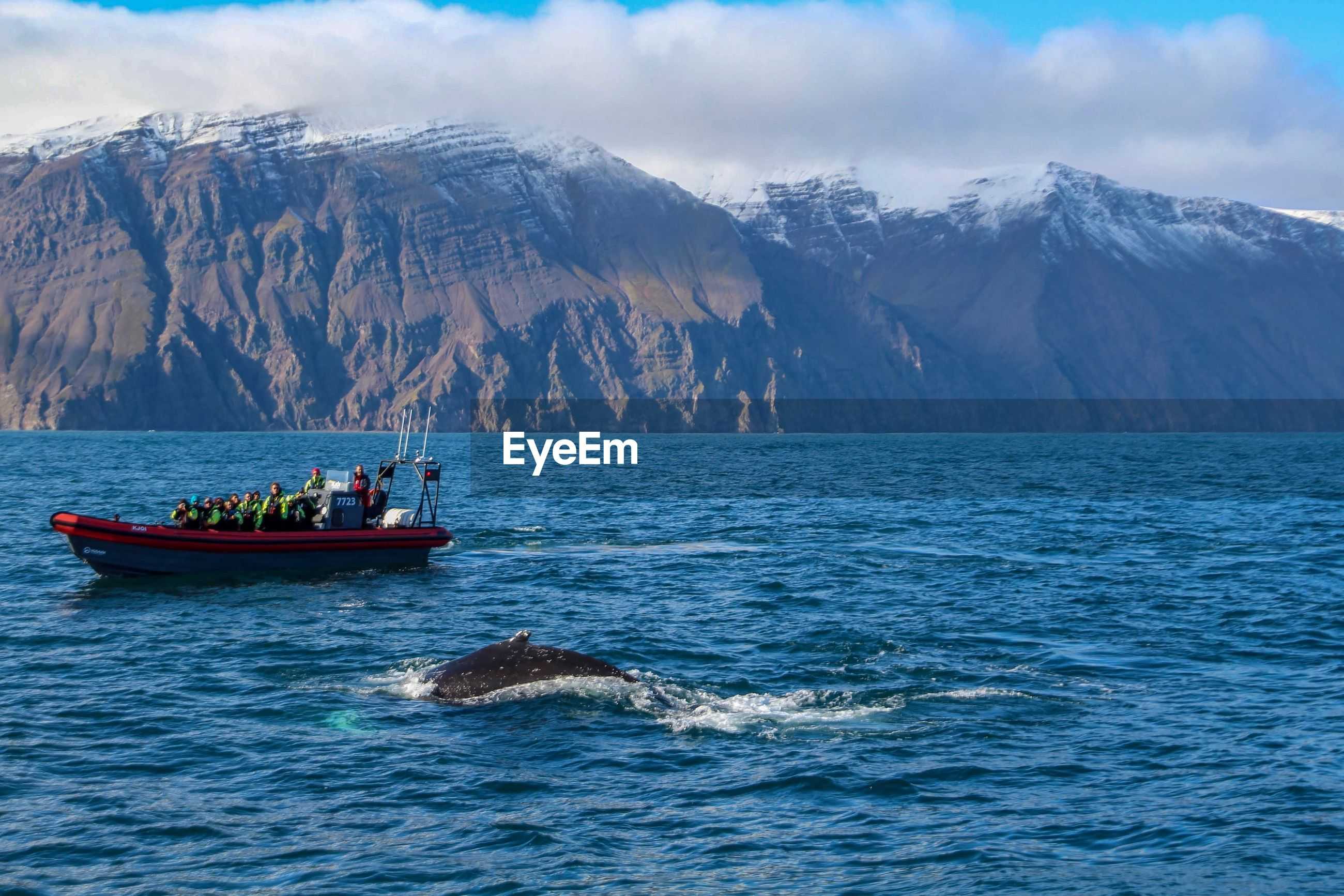 People watching dolphin swimming in sea against mountains
