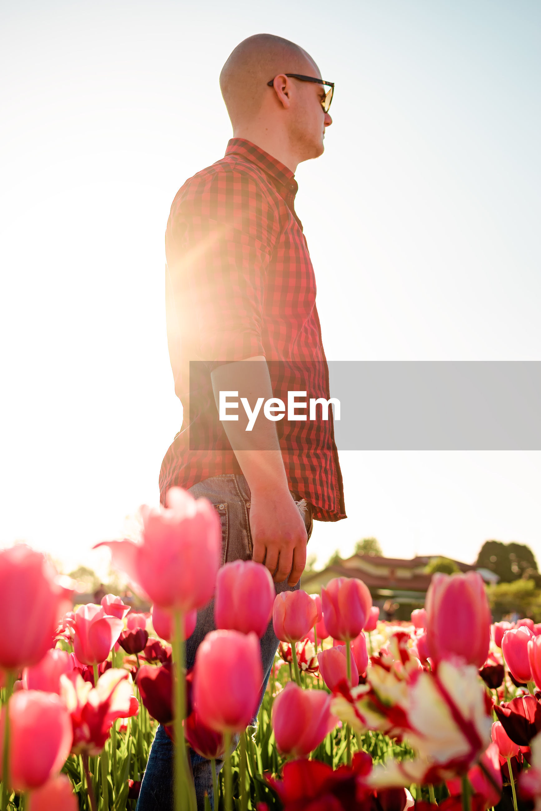 Side view of man standing by pink flowering plant at field against clear sky
