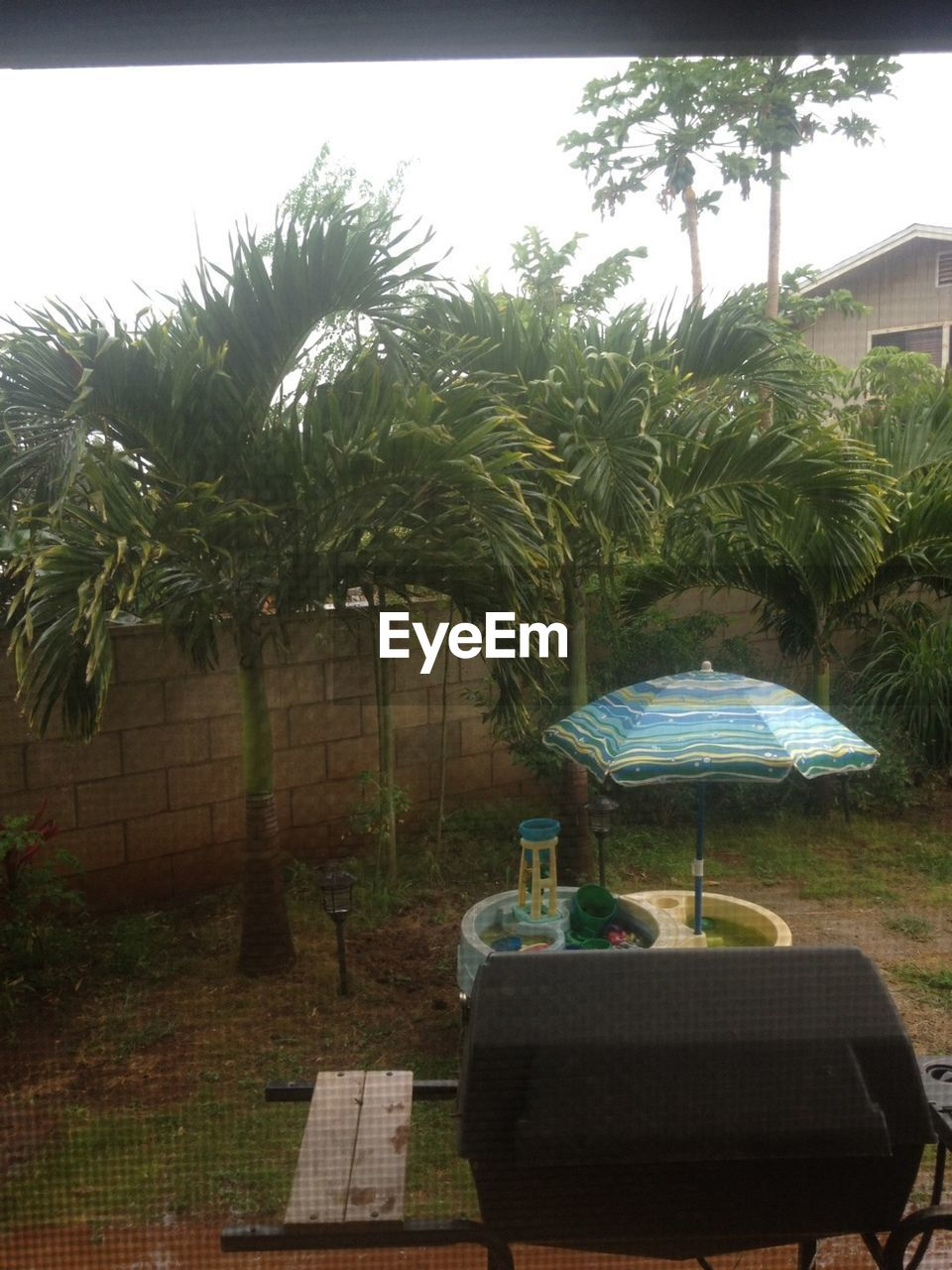 tree, day, outdoors, no people, palm tree, growth, nature