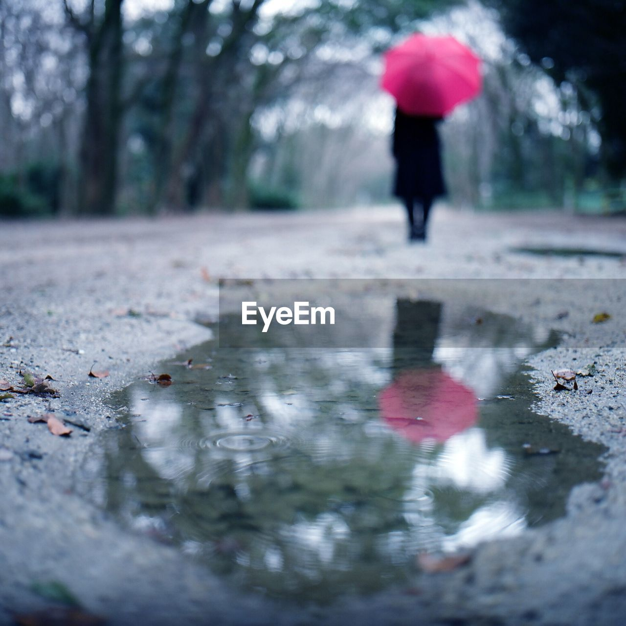 Rear View Of Woman Holding Umbrella Reflecting In Puddle On Street