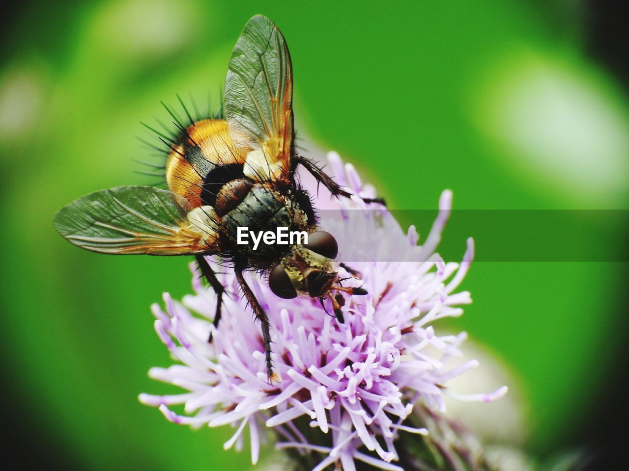 invertebrate, insect, flower, flowering plant, animal, animal themes, animal wildlife, one animal, animals in the wild, plant, fragility, beauty in nature, vulnerability, close-up, selective focus, growth, petal, day, flower head, animal wing, no people, pollination, outdoors, purple, butterfly - insect