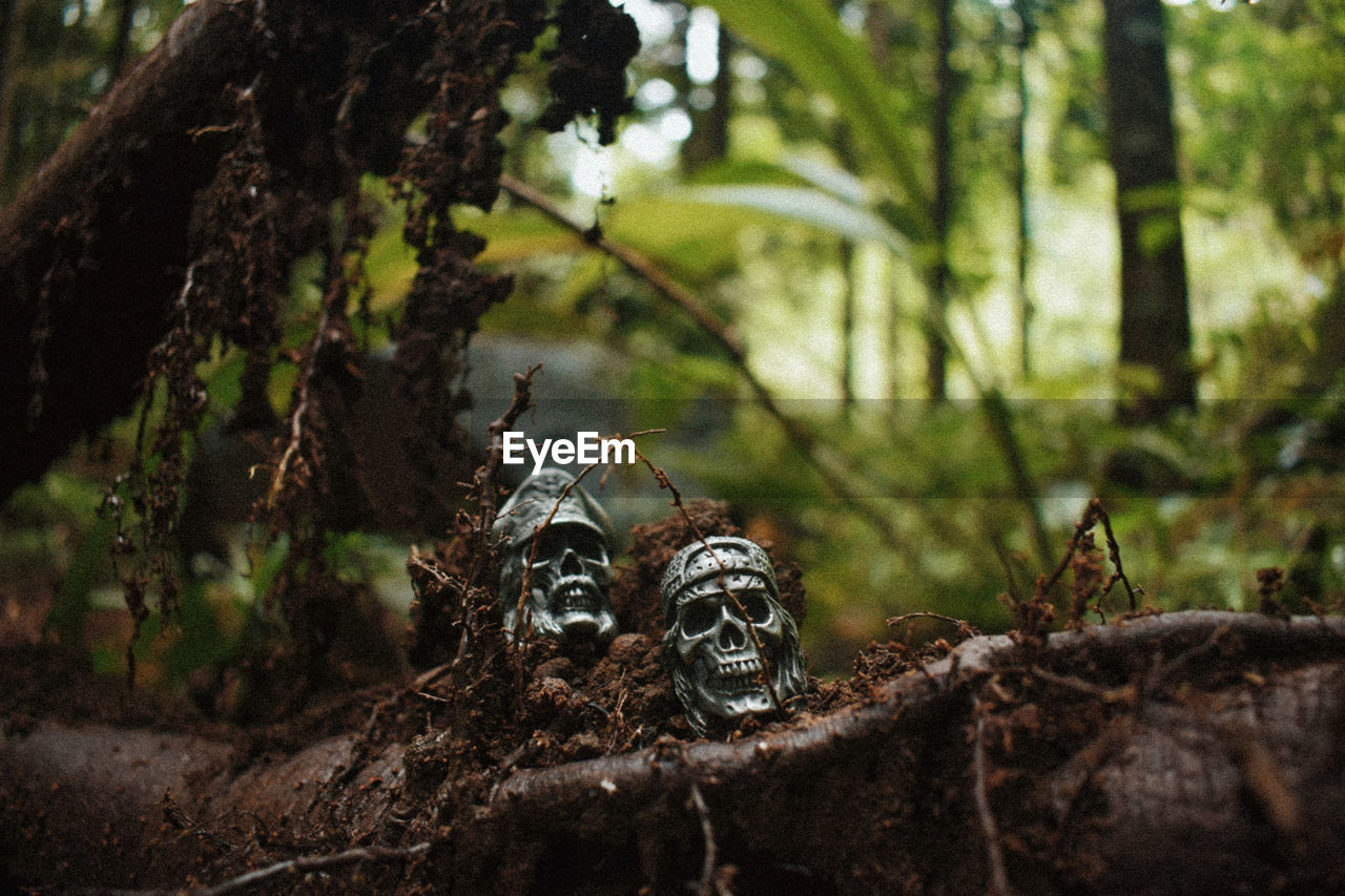 Close-up of skull figurines on root at forest