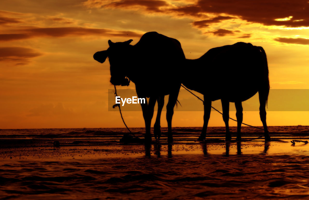 Silhouette Animals Standing At Beach Against Sky During Sunset