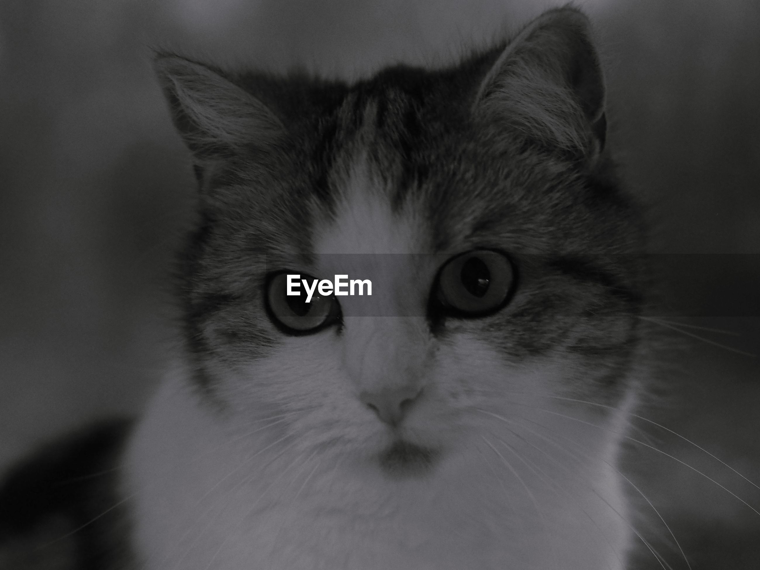 CLOSE-UP PORTRAIT OF CAT WITH EYES