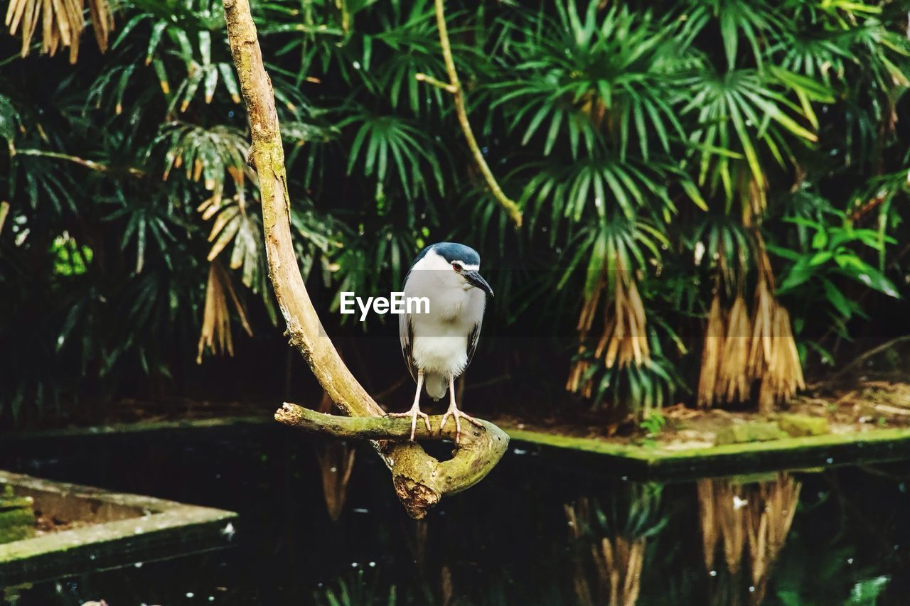 bird, animal themes, one animal, perching, animals in the wild, animal wildlife, nature, focus on foreground, outdoors, day, no people, water, branch, tree, beauty in nature, close-up