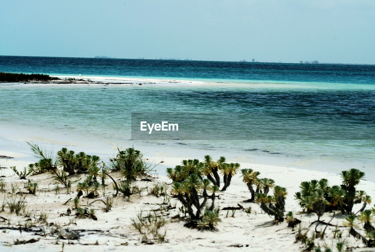 sea, beach, nature, water, horizon over water, beauty in nature, sand, scenics, shore, clear sky, tranquil scene, sky, tranquility, no people, outdoors, day, tree