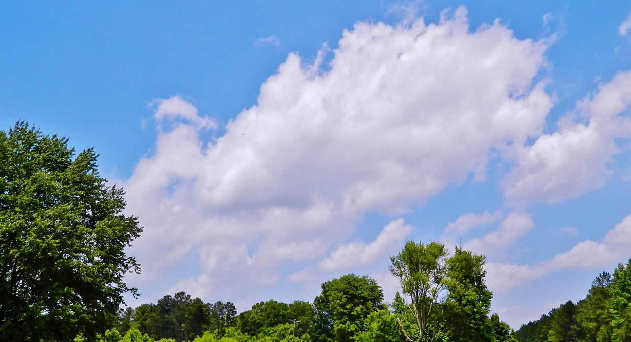 sky, low angle view, tree, beauty in nature, nature, cloud - sky, scenics, tranquility, day, blue, tranquil scene, outdoors, no people, growth