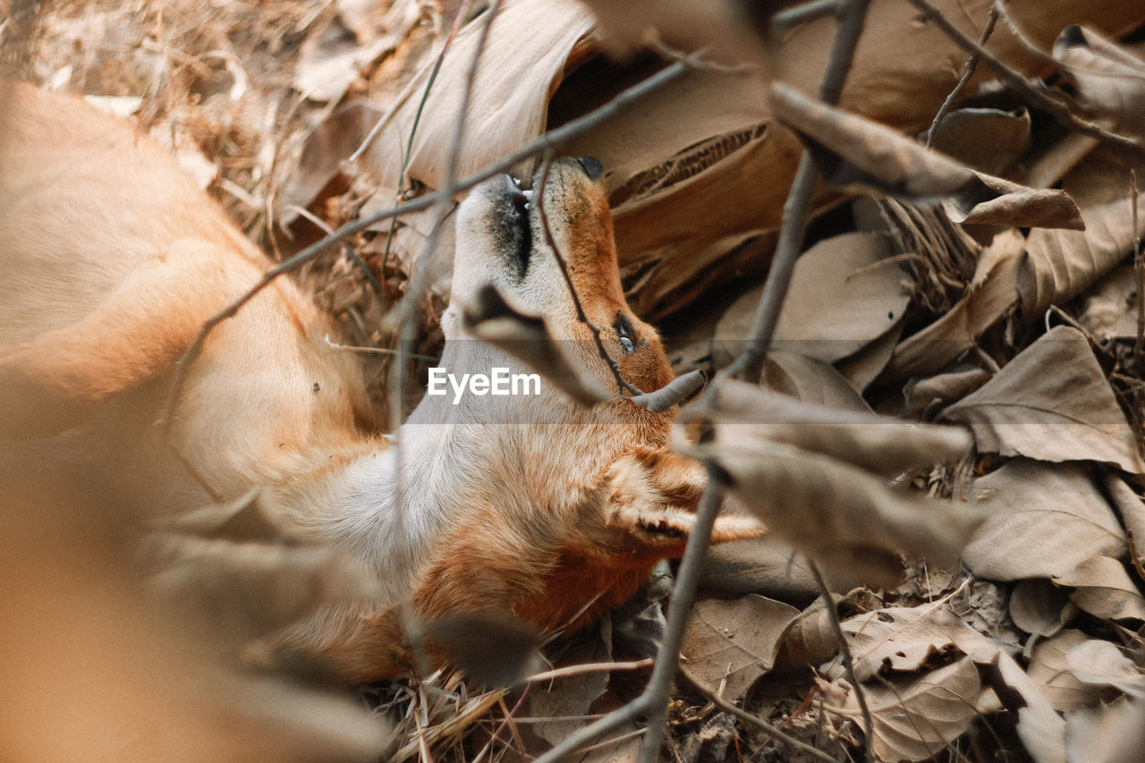 animal, animal themes, mammal, leaf, plant part, no people, one animal, high angle view, nature, selective focus, vertebrate, dry, land, pets, animal wildlife, domestic, day, young animal, close-up, animal body part, outdoors, leaves, animal head